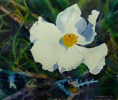 prickly poppy by marilyn gendron 1996 p1050767 ed01