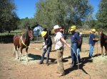 Horse Rescue Workshop
