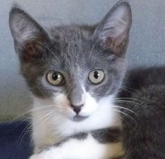Moondoggie-HDHS-ADOPTED