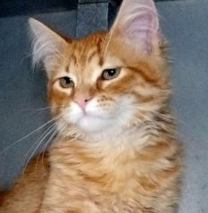 Leo-HDHS-ADOPTED