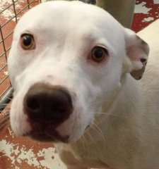 Snowy-HDHS-ADOPTED