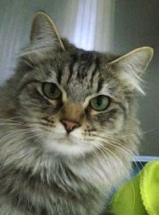 Stacy-HDHS-ADOPTED