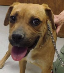 Toffey-HDHS-ADOPTED