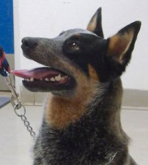 Zander-HDHS-ADOPTED