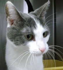 Gretchen-HDHS-ADOPTED