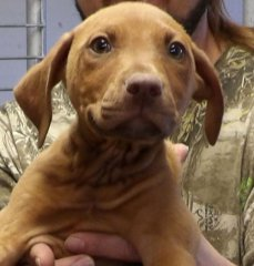 Vanessa-HDHS-ADOPTED