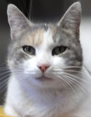 Calamity-Jane-HDHS-ADOPTED