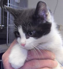 McDowell-HDHS-ADOPTED