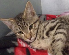 Peetree-HDHS-ADOPTED
