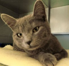 Smirnoff-HDHS-ADOPTED