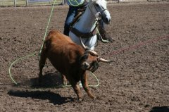 Frank Kenney-Duncan AZ team roping 092919