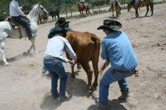 Firisco Cowbelles Rodeo 070619