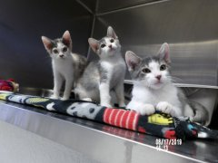 Kittens-Adopted