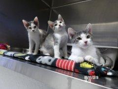 Kittens-HDHS