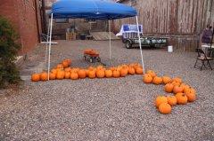 Hurley Pumpkin Patch 102420