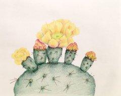 Susan Coe Brown drawings